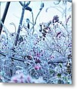 Frozen In Ice Nature Metal Print