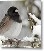 Frozen Junco Metal Print