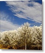 Frozen Playground Metal Print