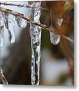 Frozen Purity Metal Print by Hannah Miller