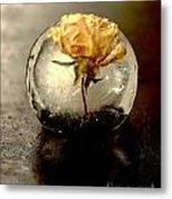 Frozen Rose In The Dark Metal Print