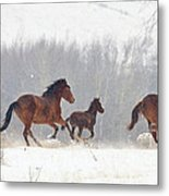 Frozen Track Metal Print by Mike  Dawson