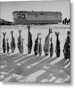 Frozen Walleye Pike Fish, Stizostedion Metal Print