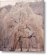 Frozen Willow Metal Print