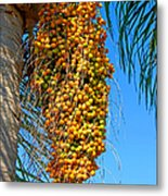 Fruit Of The Queen Palm Metal Print