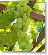 Fruit Of The Vine - Garden Art For The Kitchen Metal Print