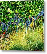 Fruit Of The Vine Metal Print by Kay Gilley