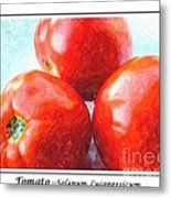 Fruit Of The Vine - Tomato - Vegetable Metal Print