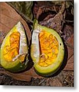 Fruit On The Forest Floor Metal Print