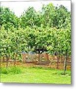 Fruit Trees Metal Print