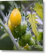 Fruits Of Our Labours Metal Print