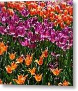 Fruity Tulips Metal Print
