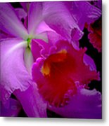 Fuchsia Cattleya Orchid Squared Metal Print by Julie Palencia