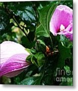 Fuchsia Flowers Laced In Droplets Metal Print