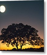 Full Moon Over Silhouetted Tree Metal Print