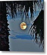 Full Moon Palm Tree 5 9/17 Metal Print