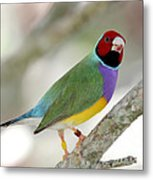 Full Of Color Metal Print