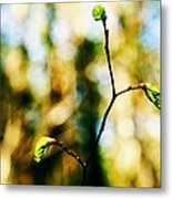 Full Of Life 6 Metal Print by Yevgeni Kacnelson