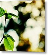 Full Of Life 9 Metal Print