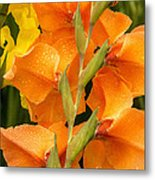 Full Stem Gladiolus Metal Print