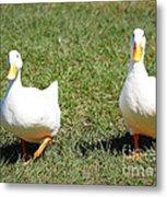 Fun Ducks Metal Print