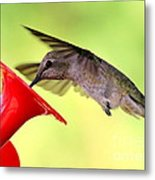 Fun Summer Hummingbird Metal Print