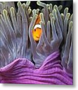 Fun Tropical Clownfish Nemo Image Bright And Colorful Home Or Office Decor Metal Print