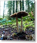 Fun With Fungi Metal Print by Cari Gesch