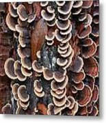 Fungi On Log Metal Print