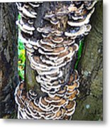 Fungus Invasion Metal Print