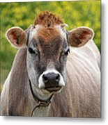 Funny Jersey Cow -square Metal Print