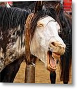 Funny Looking Horse Metal Print