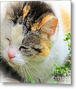Furry Ball Metal Print