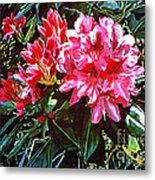 Fuschia Rhododendrons Metal Print