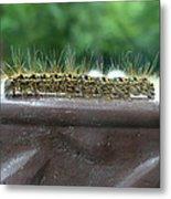 Fuzzy Caterpillar  Metal Print