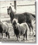 Fuzzy Ponies Metal Print
