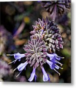 Fuzzy Purple 1 Metal Print