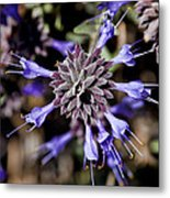 Fuzzy Purple 3 Metal Print