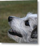 Fuzzy Whiskers Metal Print