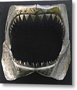 Gaint Shark Jaw Sculpture Metal Print by Stuart Peterman