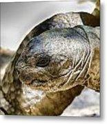 Galapagos Giant Tortoise V2 Metal Print