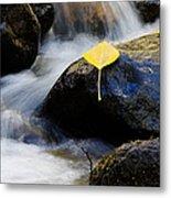 Galena Creek Trail  Metal Print