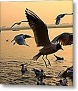 Ganges River Gulls Metal Print