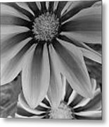Ganzia In Black And White Metal Print