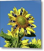 Garciacat Sunflower Metal Print