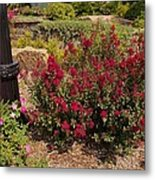 Garden Bush At Woodward Park 2f Metal Print