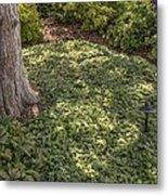 Garden Color At Woodward Park 21f Metal Print