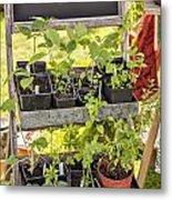 Garden Herb Nursery Metal Print