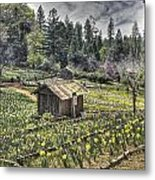 Garden Houses On Daffodil Hill  Metal Print