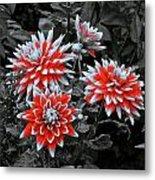 Garden Pom Poms Metal Print